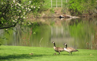 """FAIRBURY, IL – Indian Creek Golf & Country Club in Fairbury is hosting an interesting """"fund raiser"""" for their course maintenance fund that is both intriguing and rewarding, at least for three finishers. Matt Curl, the Course Superintendent, has devised and tested a rather unique way to, hopefully, gain some..."""