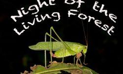 female katydid 1
