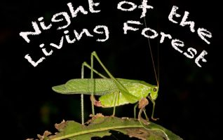 "NIGHT OF THE LIVING FOREST FUGATE WOODS – FAIRBURY We've all been out at night and seen those flying ""bugs"" that are attracted to lights, or ones that blink in the dark or, we hear creatures that make some rather strange sounds without being seen. Would you believe that what..."